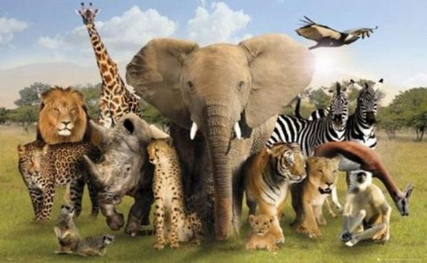 Statistici îngrijorătoare! Oamenii au UCIS mai bine de jumătate dintre animalele sălbatice de pe TERRA în ultimii 44 de ani