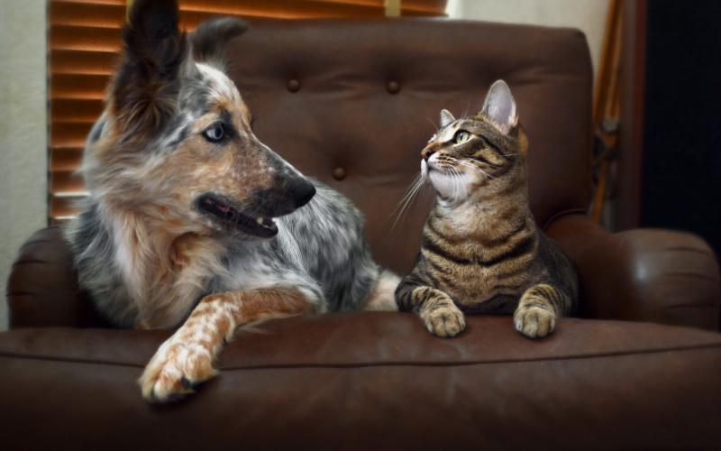 Castrări gratuite de câini și pisici