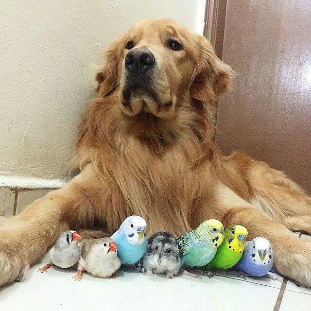 un câine este prieten cu papagali si un hamster