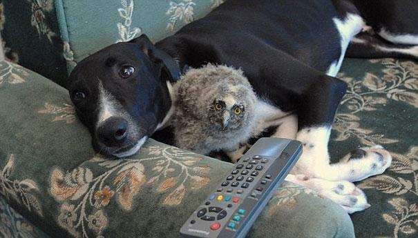 un câine a devenit prieten cu o bufniță