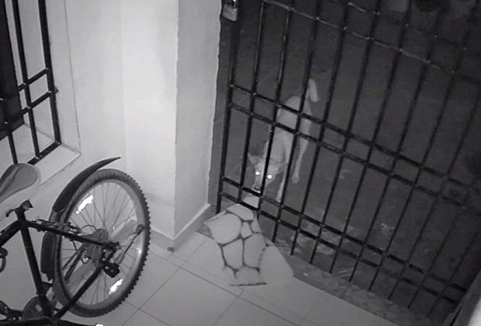 Un tânăr a observat că seară de seară îi dispare covorașul din curte, așa că a pus o cameră de supraveghere să prindă vinovatul! Surpriza a fost uriașă!