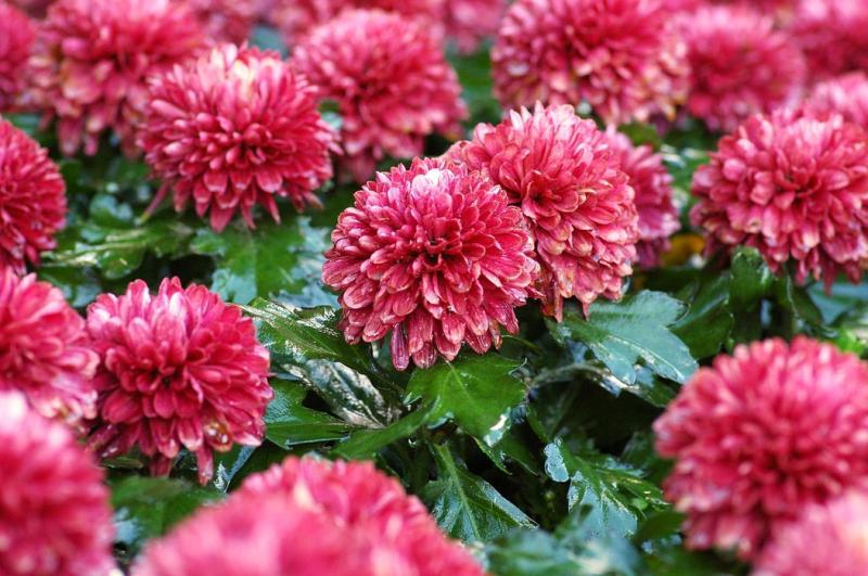 5 plante cu efecte uimitoare care COMBAT ANXIETATEA!