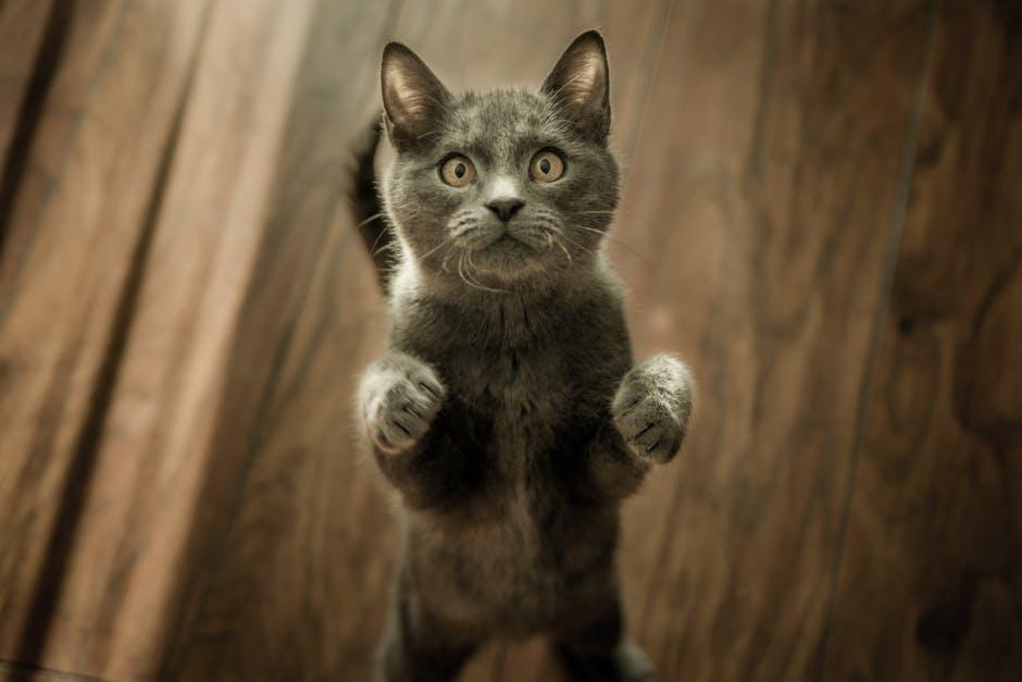 ZIUA INTERNAȚIONALĂ A MERSULUI PE JOS, LA COZMEȘTI - YouTube |Ziua Internațională A Pisicii