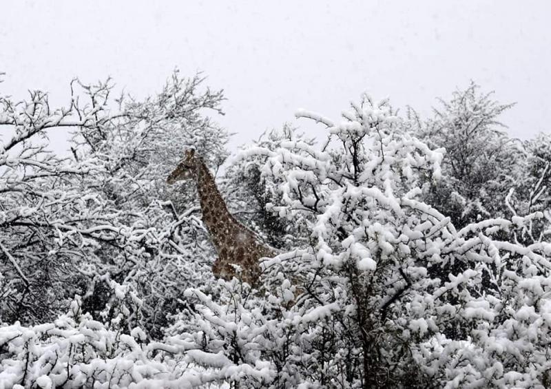 Dovada de necontestat că vremea a luat-o razna complet! A NINS în Africa, iar stratul de zăpadă a atins 25 de centimetri! Nu s-a mai pomenit așa ceva
