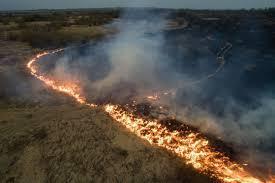 Dispare pădurea amazoniană? Incendiile puternice din această vară au distrus 17% din cea mai mare pădure a planetei
