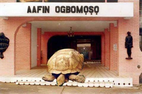 A murit la 334 de ani. Alagba, o broască țestoasă uriașă, trăia într-un palat și avea doi servitori la dispoziție