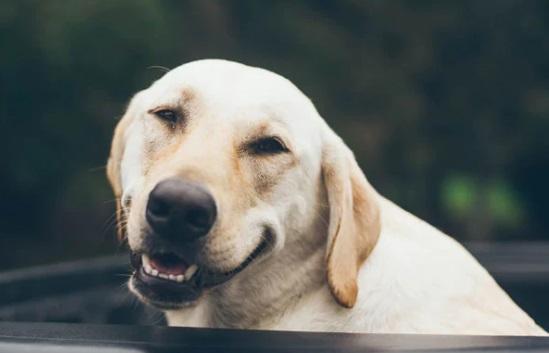 Un câine și-a împușcat stăpâna! Cum s-a întâmplat totul