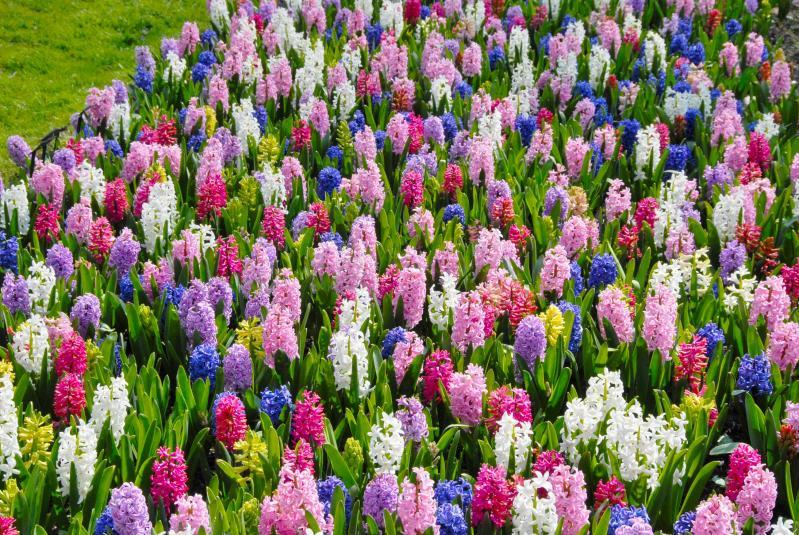 Imagini Cu Flori De Primăvară Poze Care îți Dau Energie