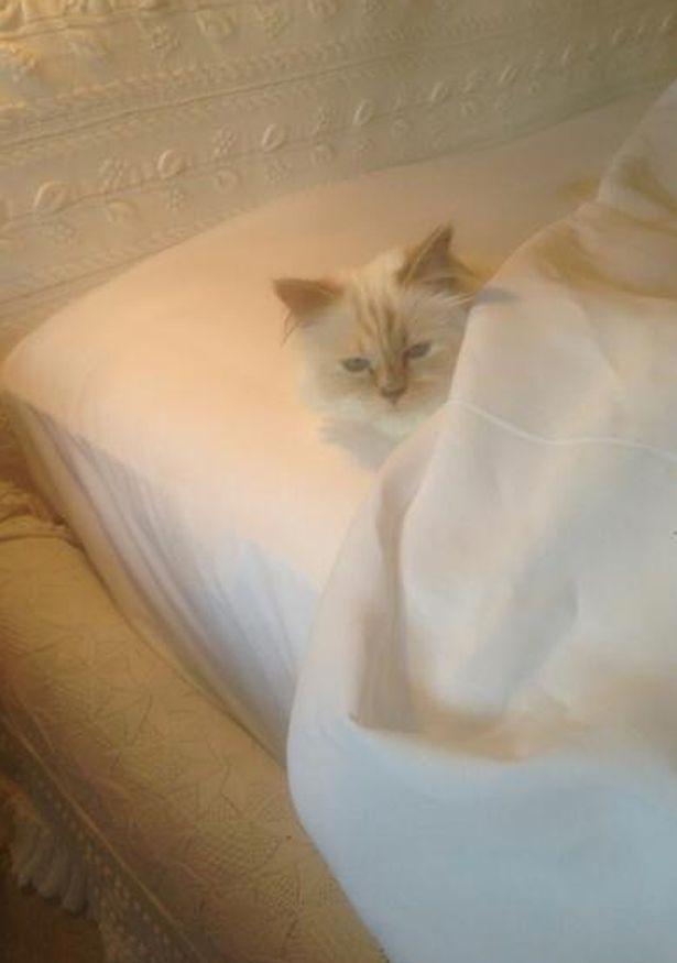 """Cum s-a îndrăgostit Karl Lagerfeld de pisica sa, dorind-o de soție: """"Am răpit-o! Nu credeam să iubesc așa!"""""""