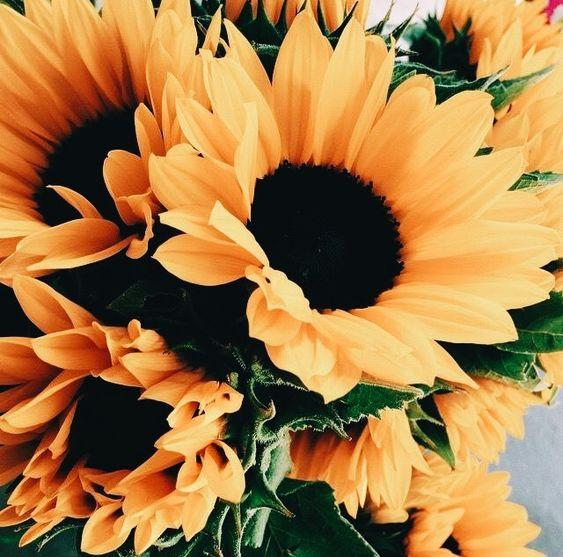 Horoscop floral. Cele mai potrivite flori pe care le poţi oferi de Florii