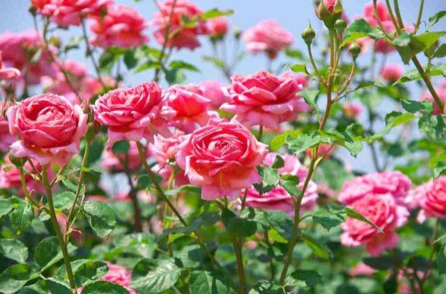 Amenajarea grădinii: 10 flori care-ți înveselesc grădina toată vara