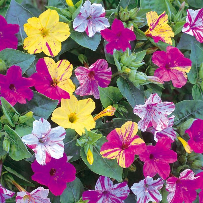 Flori de grădină. Cele mai frumoase flori care înfloresc noaptea