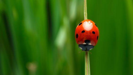Amenajarea casei: 6 obiecte care aduc norocul în casă