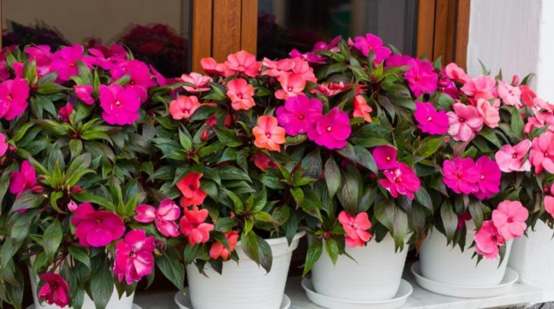 Cum îngrijești Sporul casei pe timp de vară pentru înflorire și abundență