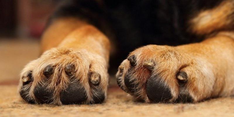 Reguli noi pentru toți posesorii de animale! Ce trebuie să faci ca să nu iei amendă