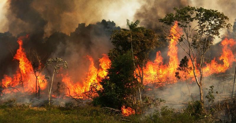 Imagini pentru Arde pădurea Amazonului