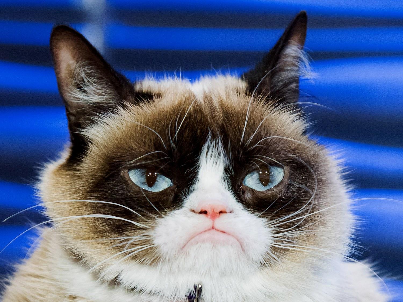 De ziua mondială/internațională a pisicii | Places to ... |Ziua Internațională A Pisicii