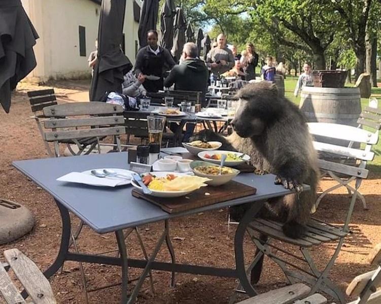 """Apariție șocantă la un restaurant de fițe! Ce client """"bizar"""" s-a așezat la una dintre mese"""