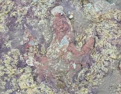O amprentă veche de peste 130 de milioane de ani, descoperită în urma ravagiilor făcute de furtuna Ciara
