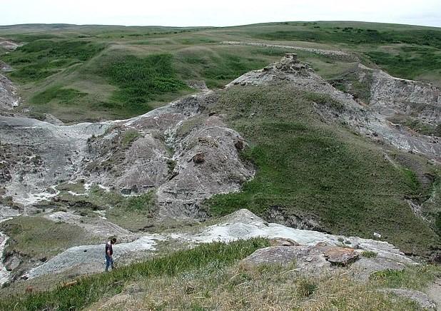 O nouă desoperire! Ouă de dinozaur, vechi de 75 de milioane de ani, găsite în Canada