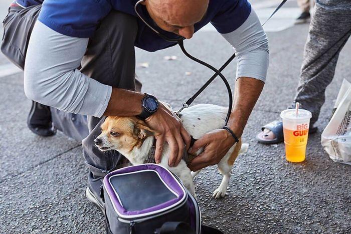 Face muncă pe gratis! Medicul veterinar care merge pe jos kilometri întregi și salvează toate animalele pe care le întâlnește