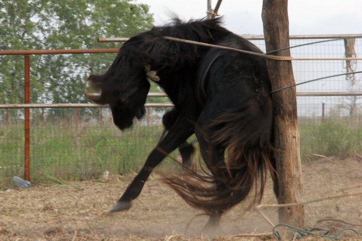 FOTO | Imagini devastatoare cu caii maltratați din Letea. Regretata Cristina Țopescu s-a aflat printre cei care au salvat animalele de la cele mai grele chinuri