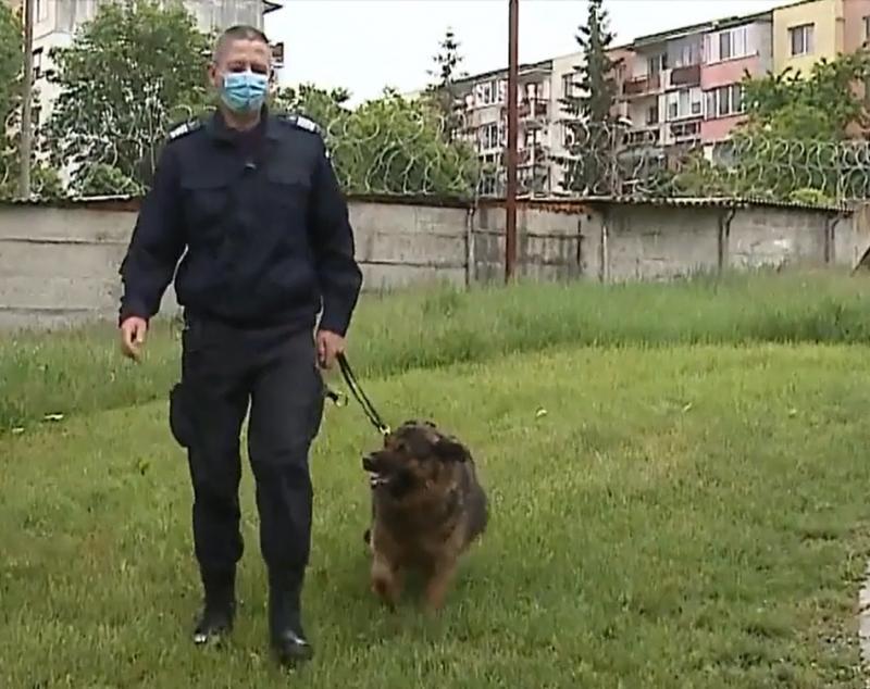Un câine jandarm din Mureș așteaptă să fie adoptat! Ciobănescul german și-a încheiat misiunile și își caută o familie