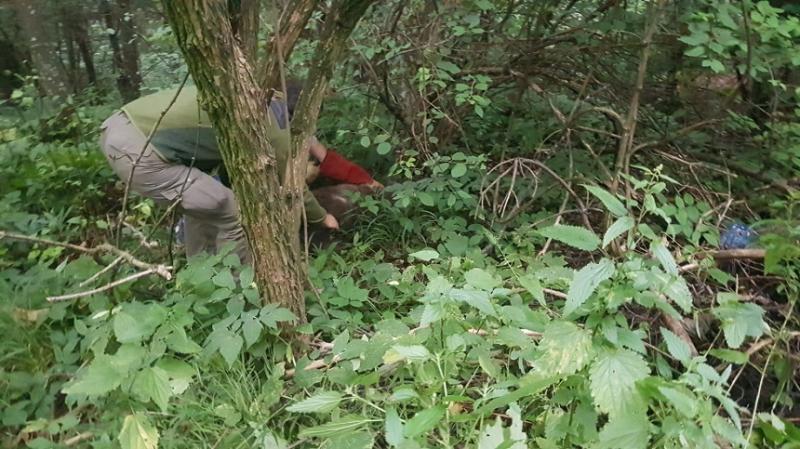 Pui de urs lovit de maşină între Râşnov şi Predeal, găsit pe marginea drumului în stare gravă. Animalul, preluat de o asociaţie - VIDEO