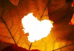 "Poezia ""Septembrie 10"""