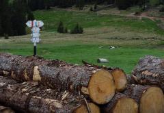 Mafia lemnului din România – subiect într-un serial de televiziune