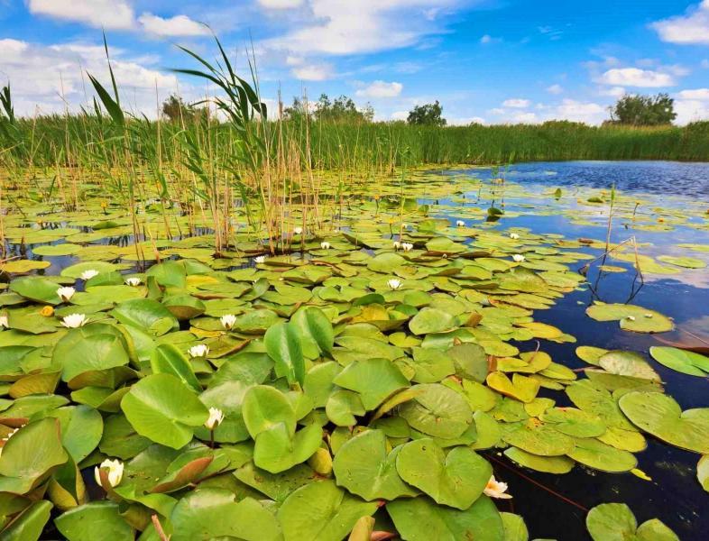 Delta Dunarii -  a cincea minune naturala a lumii, potrivit Instagram