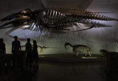 Vizita virtuală, anul acesta, la Muzeul Antipa