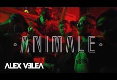 Alex Velea - Animale | VIDEOCLIP
