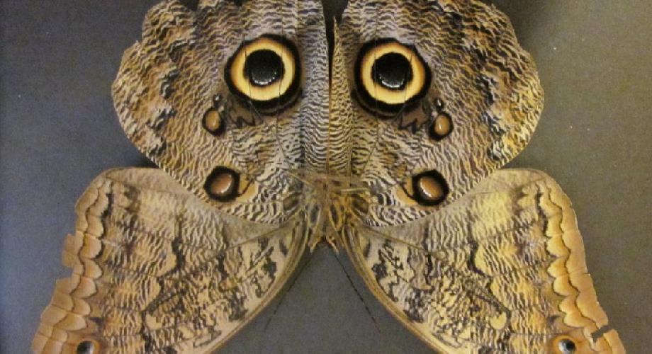 Expoziția temporară de fluturi tropicali vii