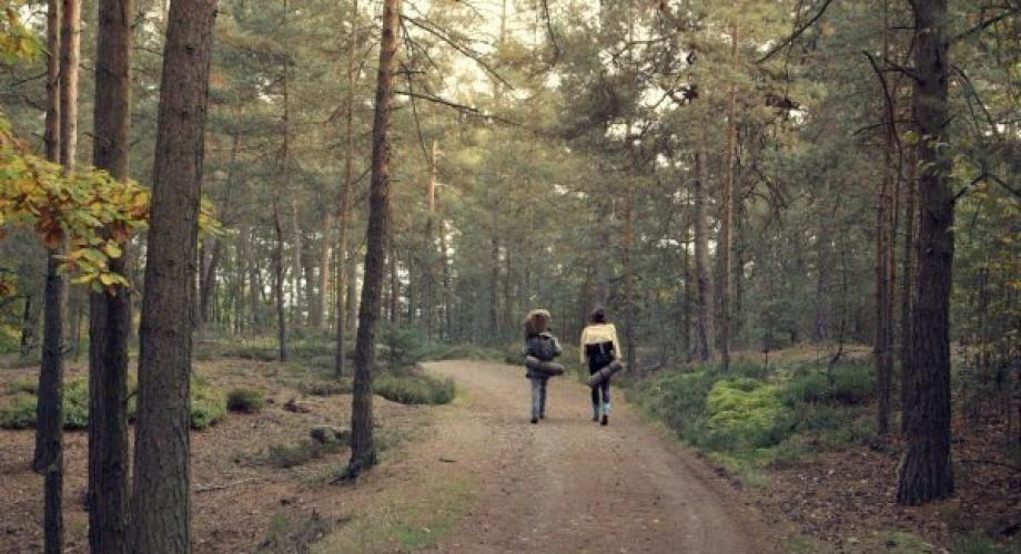 Filmele despre natură influențează pozitiv starea de spirit