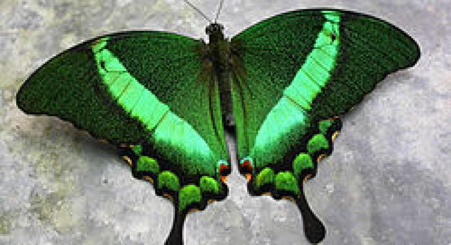 """""""Culorile prind aripi"""", expoziţie de fluturi vii la Muzeul Antipa"""