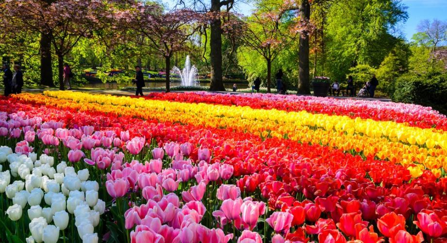 """""""Romantismul Florilor"""" vine de la Festivalul Lalelelor din Olanda"""