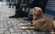 """O maidaneză din România, câine-erou în Albania"""""""