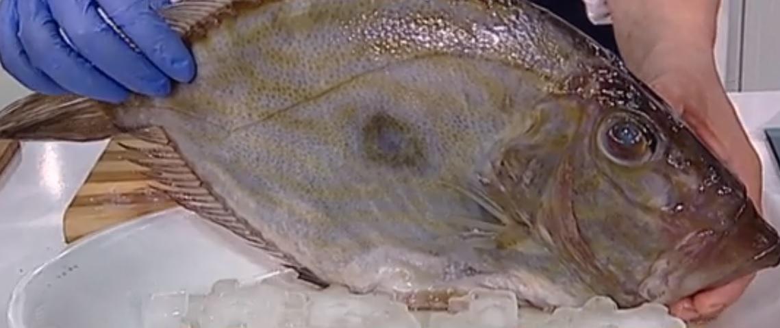 Peștele Sfântului Petru ascunde o poveste ce îți dă fiori! Legenda biblică explică totul!